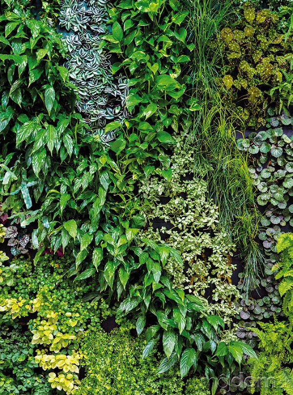 Popri jednodruhových zelených stenách