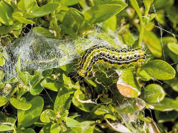 Ochrana rastlín na začiatku