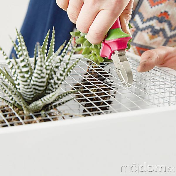 8. OTVORY Prichystaným rastlinám