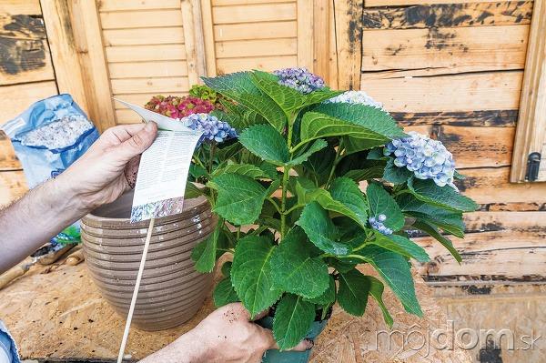 V záhradníctvach si môžete