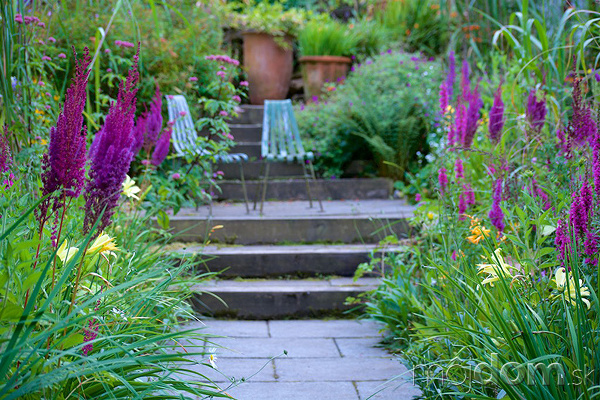 Dažďové záhrady