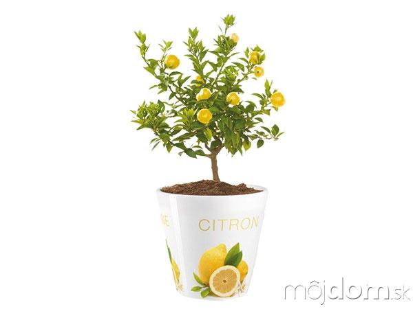 Kvetináč Citrón, priemer 15,5