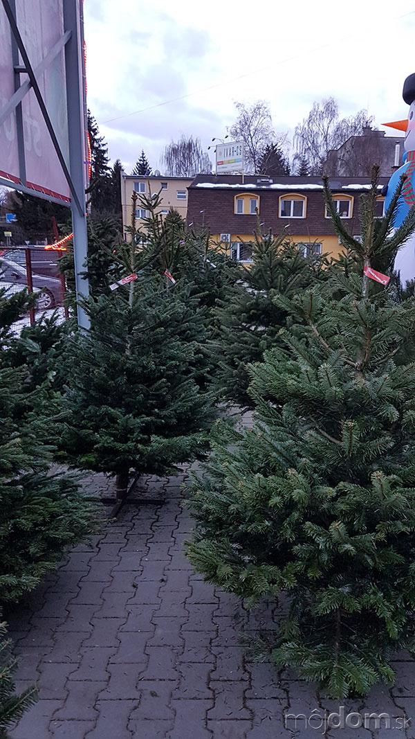 Nemáte ešte vianočný stromček?