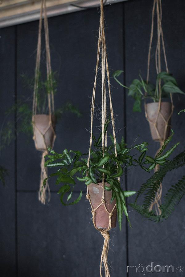 Levitujúce rastliny