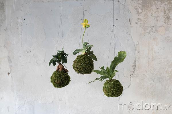 81ef7bc3f Levitujúce interiérové rastliny? Inšpirujte sa týmito krásnymi ...