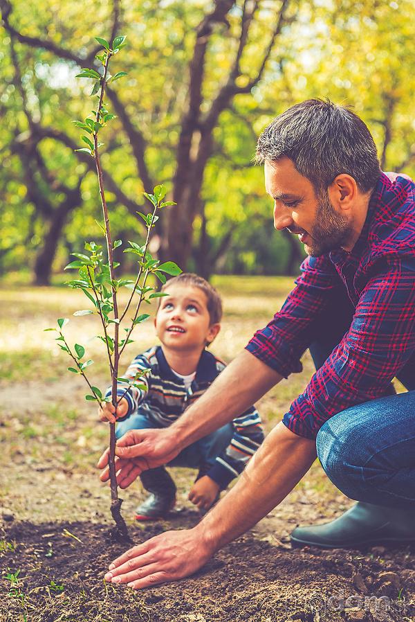 Keď zasadíte strom, aj