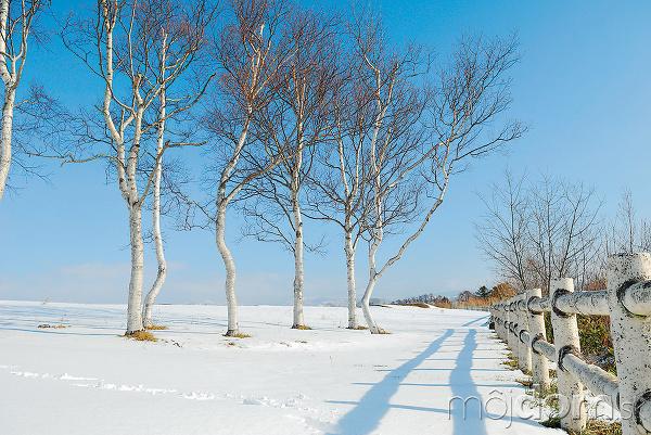 Máloktorý listnatý strom vynikne