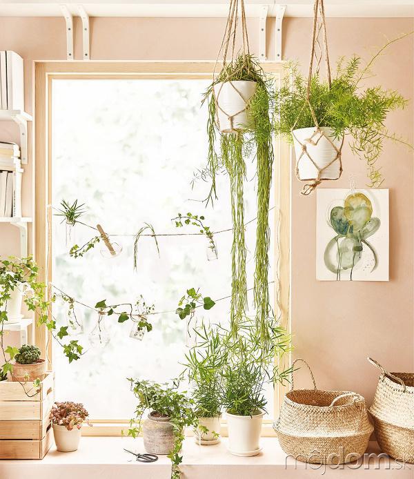 Živé ozdoby. Rastliny vnesú