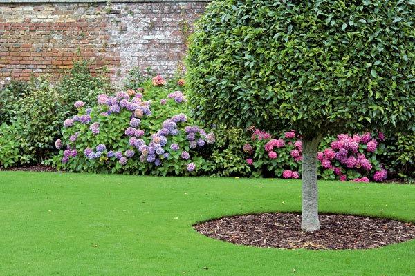 Cvijeće oko kuće  - Page 6 Zahrada-styl-mdspec_0903_125