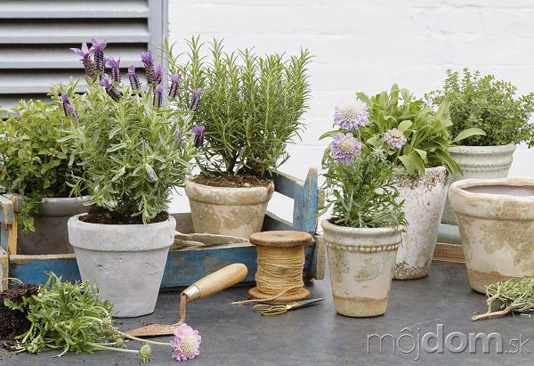 bylinky v kvetináči