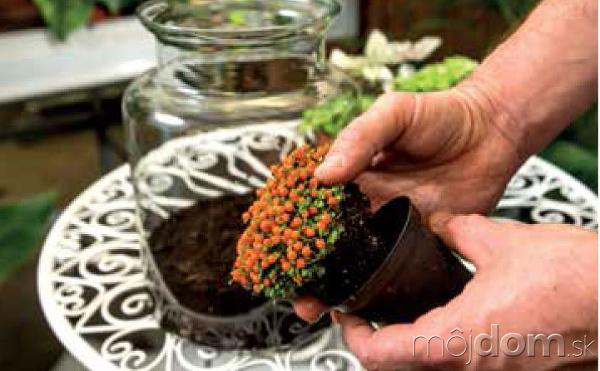 sadenie tropických rastlín do