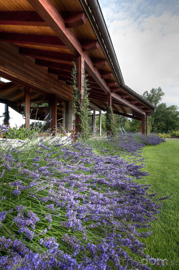 lúčne kvety pred terasou