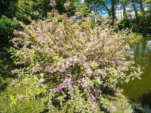 10 najkrajších kvitnúcich kríkov