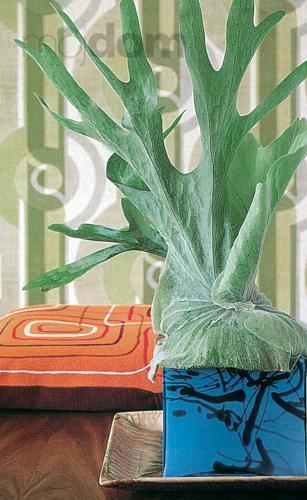 Rastliny s architektonickým efektom