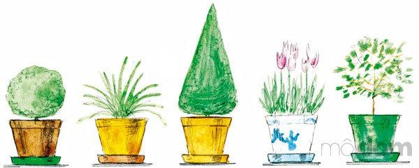 Tvarovaný krušpán chlorofytum tvarovaný cypruštek tulipány