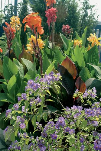 Rajská záhrada na desiatom