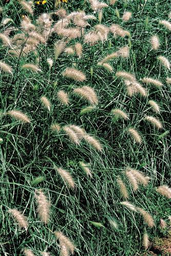 Záhrada na suchom mieste