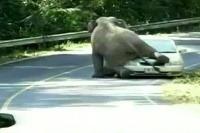 Slon si pomýlil auto