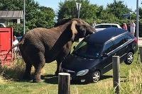 Slon versus Škoda Fabia