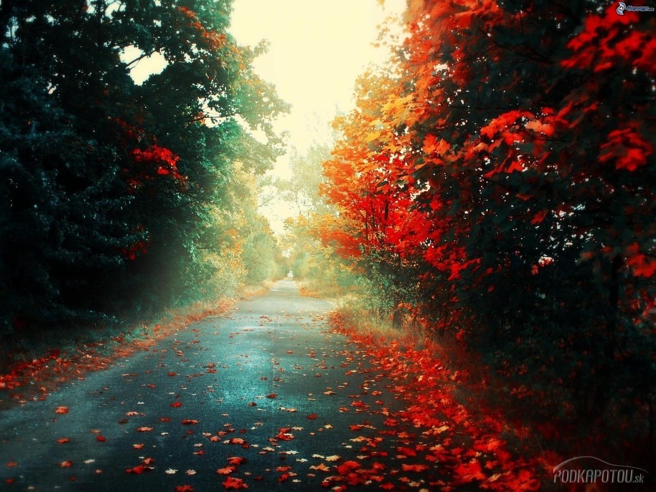 4f9bbddaa nasledujúca fotka predošlá fotka zväčšiť fotografiu Na jeseň sa začínajú