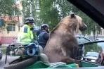Medveď na motorke
