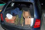 Konope v aute