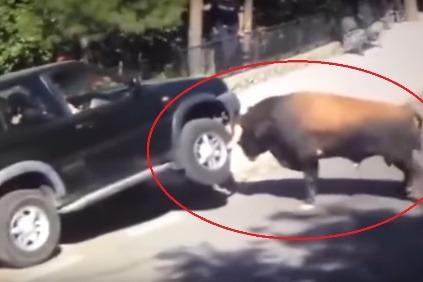 Bull vs Nissan