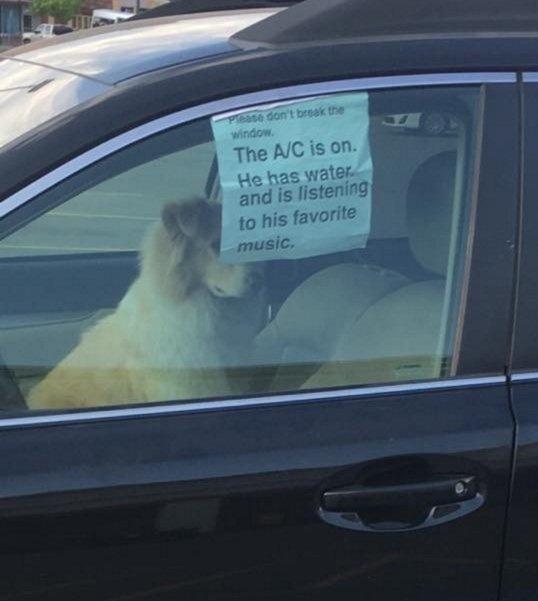 Pes sám v aute