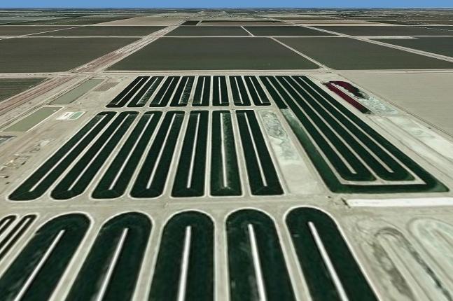 Biopalivá - riasy v