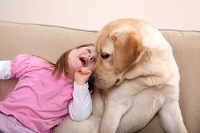 Zvieratá pozitívne ovplyvňujú telesné