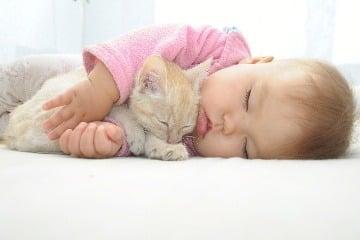 Domáce zvieratká: Ktoré áno