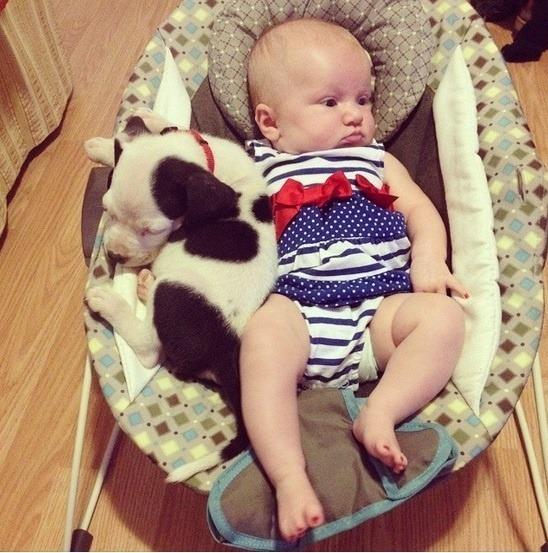Bábätko a šteniatko -