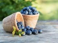 Sezóna modrofialového ovocia je