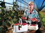 Ovocie z BONI FRUCTI