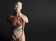 Ľudské telo má niekedy