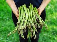 Vysoký obsah asparagínu má