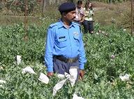 Ochrana makových polí v