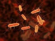 Baktérie E. coli. Foto: