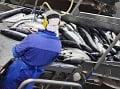 Ryby, ktoré boli vychované v morských sádkach, putujú do výrobne na spracovanie rybieho oleja. (Foto: ČTK)