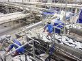 Tisíce lososov pripravené na spracovanie rybieho oleja. (Foto: ČTK)