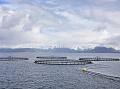 Morské sádky, kde sa chovajú lososy. (Foto: ČTK)