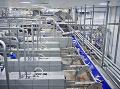 Vo výrobni sa nachádzajú špeciálne stroje, ktoré zabíjajú lososy slabším elektrickým prúdom. (Foto: ČTK)