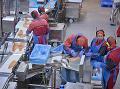 Súčasťou výroby je aj dôkladné očistenie rybieho mäsa. (Foto: ČTK)