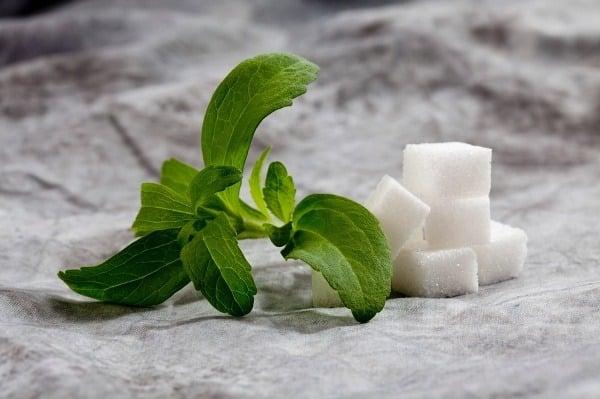 Stevia cukrová je zdravým