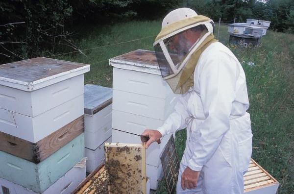 Experti analyzovali zloženie medu