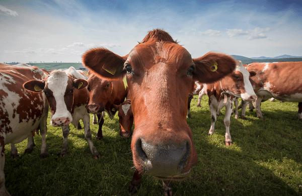 Ako rozoznať kvalitné mäso?