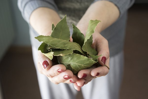 Silu bobkového listu odhalí
