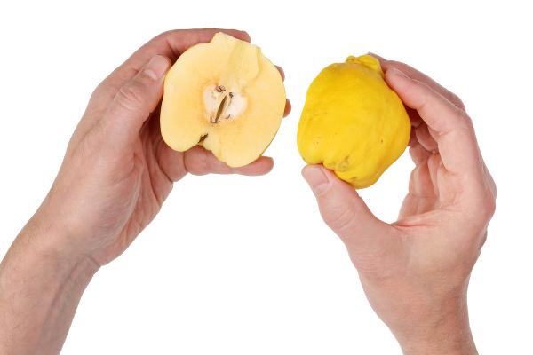 Zabudnuté ovocie hlási veľký