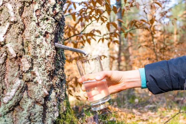 Voda zo stromu nielen
