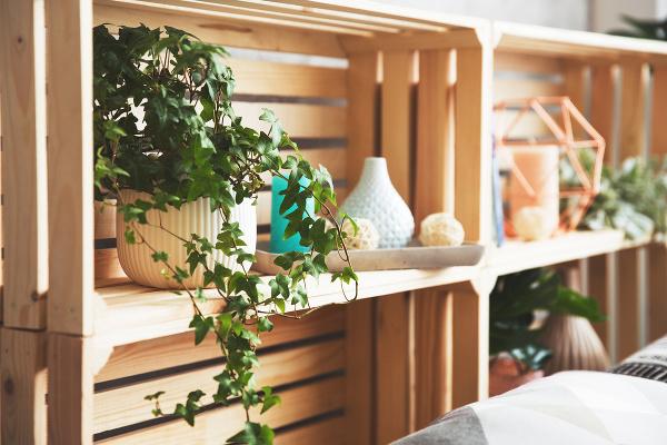 Nenápadné izbové rastliny s